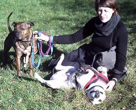Our oldie Ty needs a cosy foster place, DOB 2000 RockyTyson5