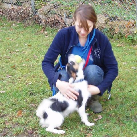 Trevor, JRT, is looking for a foster home Trevor