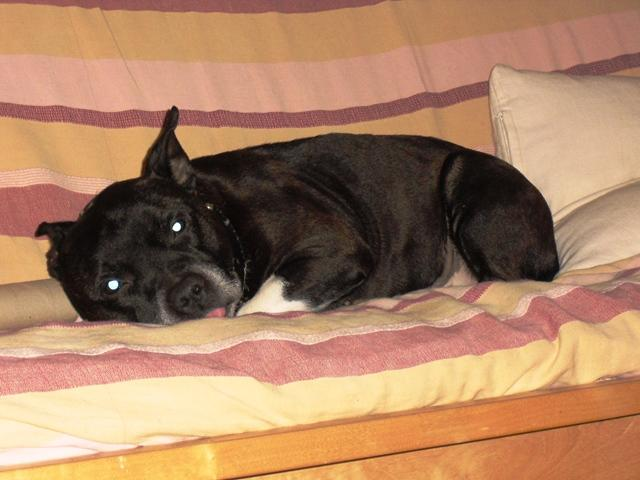 SamWise, DOB 2005, is in need of a foster home DSCI0083