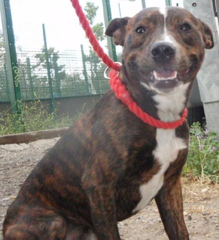 Are you able to foster Bentley? Bentley