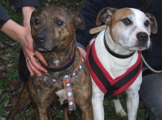Our oldie Ty needs a cosy foster place, DOB 2000 Rocky+and+Tyson+2