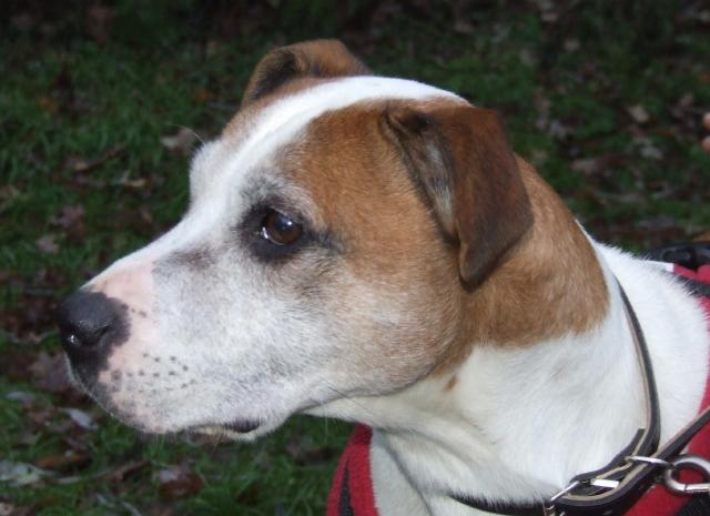 Our oldie Ty needs a cosy foster place, DOB 2000 Tyson3